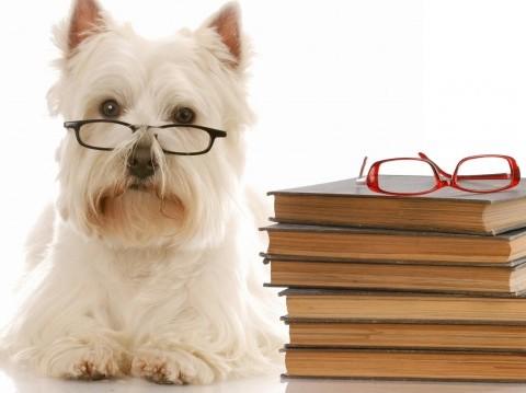 Den Glade Hundeskole - Nyheder