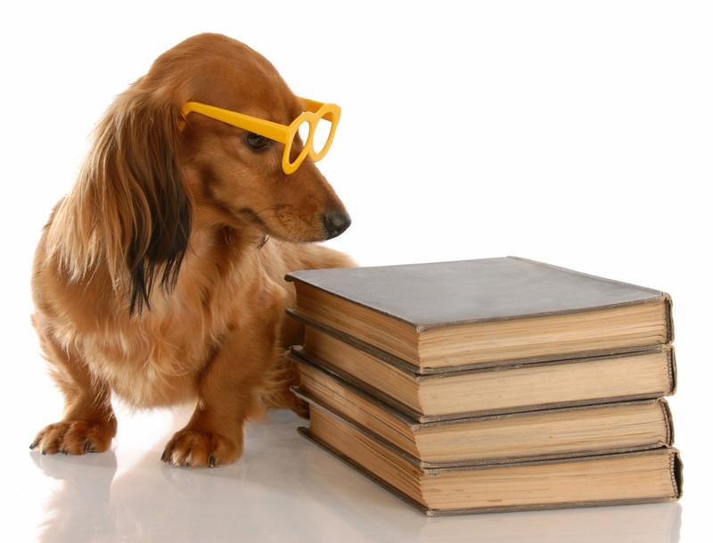 Gymnastik for hundehjerner