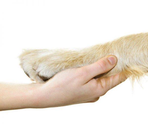 Hundetræning enetime