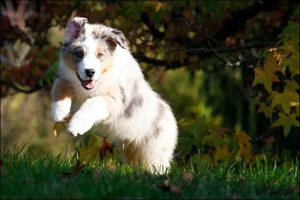 Teenagerhund - Pubertethund, Den Glade Hundeskole