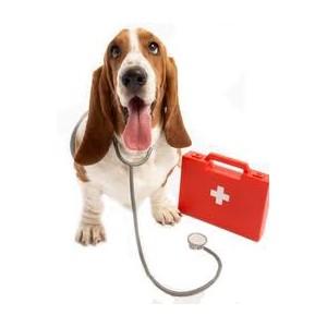 Førstehjælpskasse til hunde