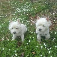 Thea og Freja