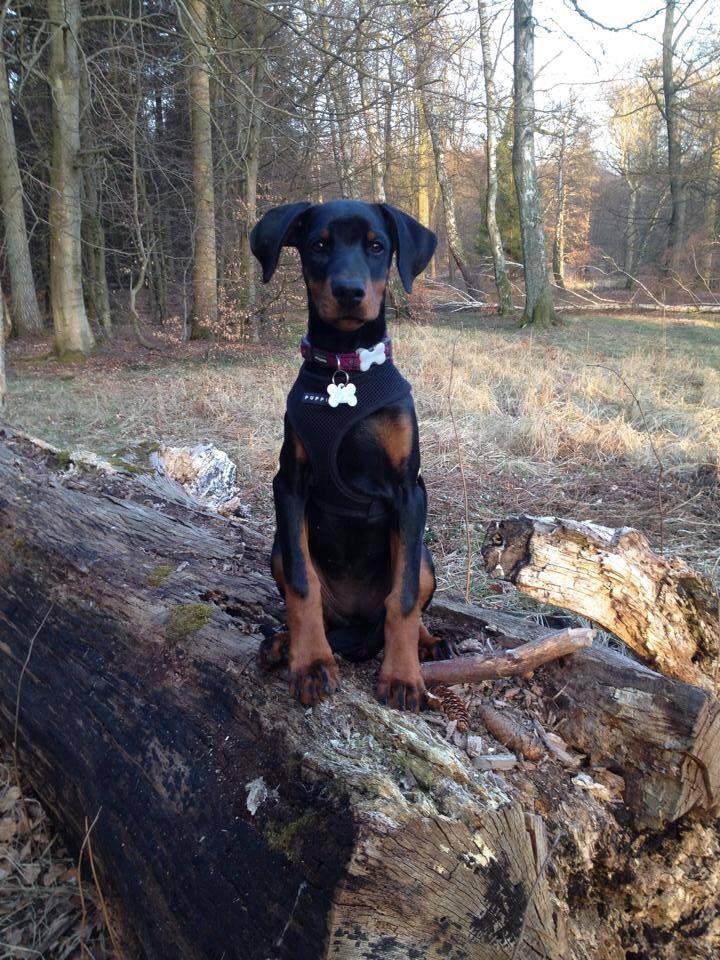 Er hundeskoven det perfekte sted?