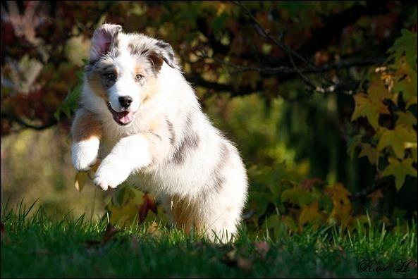 Hundekursus og hvalpetræning er vigtigt