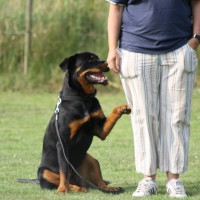 Hunde kurser og træning