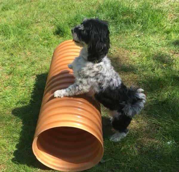 Hundegymnastik-Hundefitness-Kropskontrol