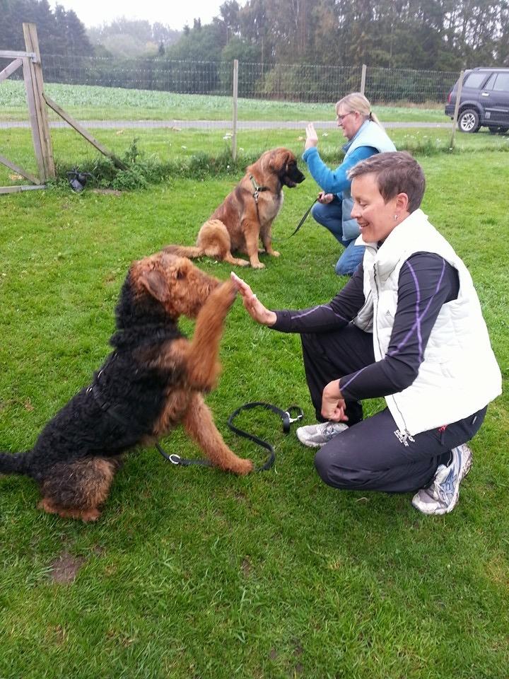 Hundetræning 1 - 15 år