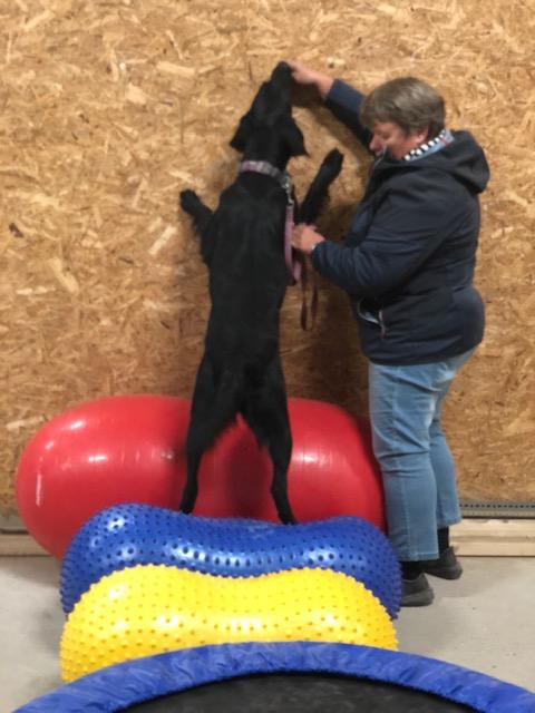 Hundefitness - Den Gladehundeskole