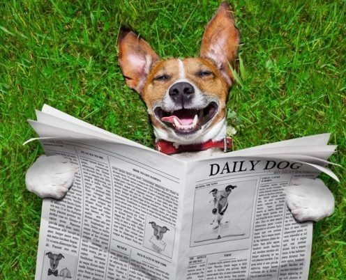 Nyheder - Den glade Hundeskole