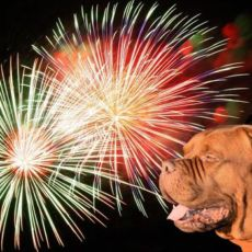 Nytår med jeres hund – Er i klar?