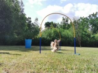 Hoopers - Den glade hundeskole